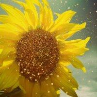Sunflower :: Ntalia Grey