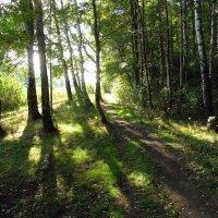 Сентябрь в парке IMG_8514 :: Андрей Лукьянов