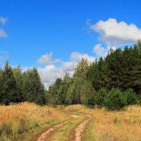 Из леса в лес ведёт дорога... :: Лесо-Вед (Баранов)