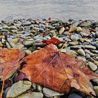 где-то рядом ходит осень :: Валерий Дворников