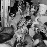 Собачья республика ШКИД :: Анатолий Тимофеев