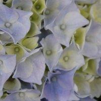 Цветы :: Olga