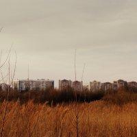 природа :: Alesya Putsilouskaya
