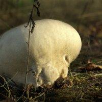 Запах земли :: Валерий Талашов