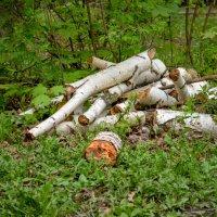 Дрова в лесу :: Наталья Чуфистова