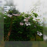 Алтайские цветы по фото Людмилы Лой 2 :: Владимир Хатмулин