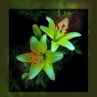 По фото Людмилы Лой Ночные цветы :: Владимир Хатмулин