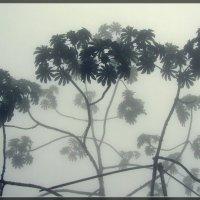 Утро. Туман :: Igor Khmelev