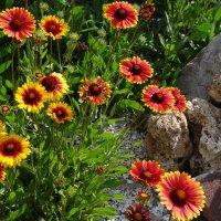 Цветы и камни :: Юрий Владимирович 34