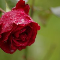 После дождя :: Евгения Шевченко