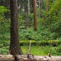 Вечно зеленые даже в следующей жизни IMG_8811 :: Андрей Лукьянов