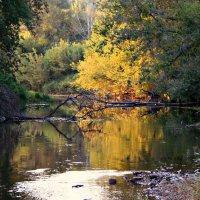 Осень рядом... :: Евгений Юрков