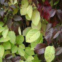 Осенние листя :: Анатолий