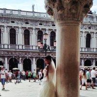 Тайская свадьба в Венеции :: Alistina