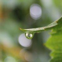 капля дождя :: Юлия Яровенко