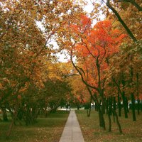 Осень-осень.. :: Lady Etoile