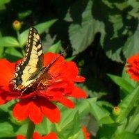 Цветок на цветке :: Геннадий Храмцов