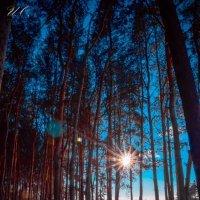 лес :: Оксана Ушанкова