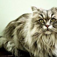 Серьезному коту - серьезные фото :: Ольга Жукова
