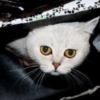 Котя :: Katerina Lesina