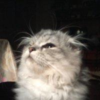 Мечта кота :: Елена