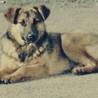 Серьезная собака. :: Стас Мельник