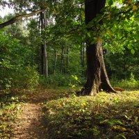 На старых местах - сентябрь IMG_9040 :: Андрей Лукьянов
