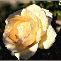 Осенний дождь и роза :: galina tihonova