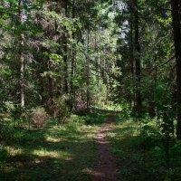 В дремучем лесу :: Элен .