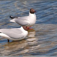 подружки :: linnud