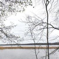 Озеро,плавни,осень :: Наталья Золотых-Сибирская