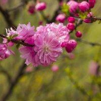 цветы :: Yuriy Pryazhnikov