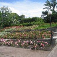 Розарий в парке Кадриорг :: laana laadas