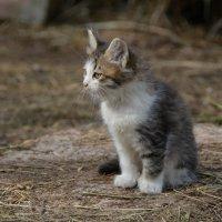 Котёнок :: Павел Trump
