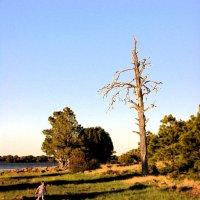 Пейзаж с сухим деревом и бегущей девочкой :: Анатолий Бастунский