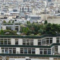 Сады Семирамиды на крышах Парижа :: Светлана Лысенко