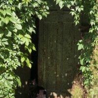 Дверь в сказку :: AVA Тина