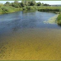 Река Битюг в Воронежской области :: Ольга Кривых