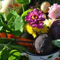 Овощи. :: zoja