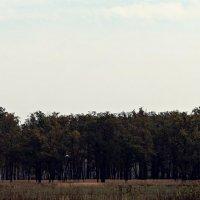 Заколдован невидимкой, дремлет лес под сказку сна... :: София Петухова