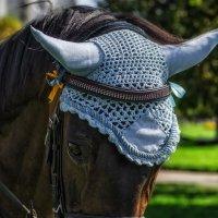 Призовой конь Гриша :: Виктор