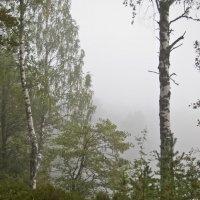 Вид на озеро :: Андрей Черемисов