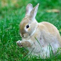 Братец кролик :: Viktor Pjankov