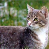Взгляд хищницы :: Андрей Куприянов