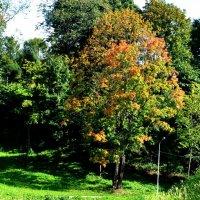 Подкрадывающаяся осень... :: Андрей Самуйлов
