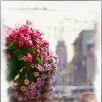 Городские цветы :: Станислав Лебединский
