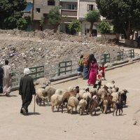 Жизнь окраин Египта :: Владимир Марков