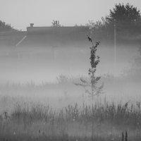 Туман на земле. :: Александр Юрьевич *