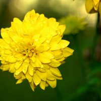 Осенние цветы :: Нэля Лысенко