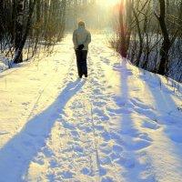 Дорога в солнечный лес :: Геннадий Храмцов